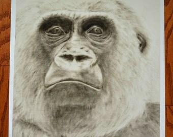 Gorilla Art Print, Gorilla Gaze Oil Dry Brush Painting, Black and White Art Print
