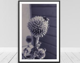 Simplistic Wall Art, Zen Wall Print, BW Art Print, Print Above Couch, Flower Print, Nature Art, Modern Wall Art, Black & White Print