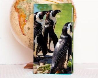 penguin tract holder hardcover tract holder jw pioneer giftsjw ministry field service organizerjw campaign holder jw - Field Service Organizer