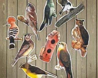 Vintage Birds Series 2 Sticker Flakes