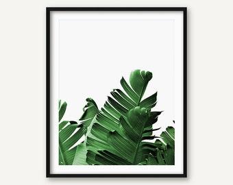 Palm Leaf Print, Palm Print, Banana Leaf Print, Tropical Print, Botanical Print, Palm Poster, Nature Print, Green Leaf Print, Greenery Print