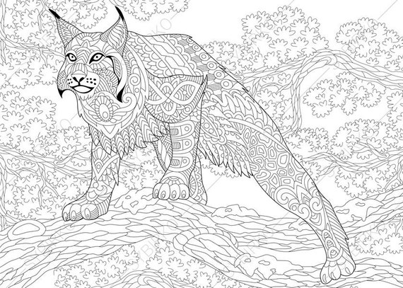 wildcat lynx bobcat caracal coloring pages coloring book pages for kids and adults