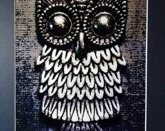 Wise Old Owl Matted Photograph