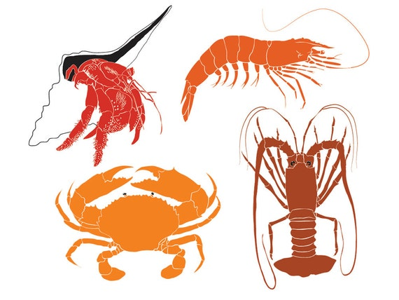 Crustacean clip art images of Prawn, Mud Crab, Lobster and Hermit Crab,  marine life vectors - instant download from SaltwaterOz on Etsy Studio