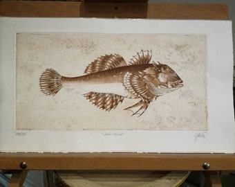 Engravings of fishes
