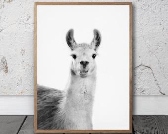 Llama Print - Llama Wall Art, Printable Photo, Digital Download, Black And White, Llama Portrait, Quirky Animal Art, South American Art