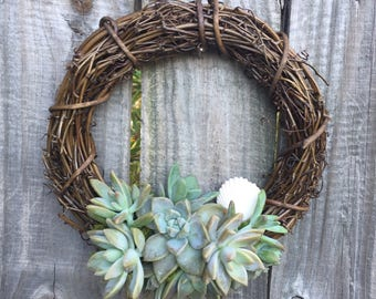 "8"" living succulent wreath"