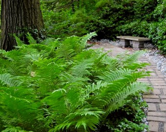 This weeks special #2 moss and fern garden free ship in USA , we ship overseas and Canada