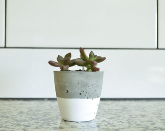 Concrete Succulent Planter, Small, Concrete and White, Modern & Trendy