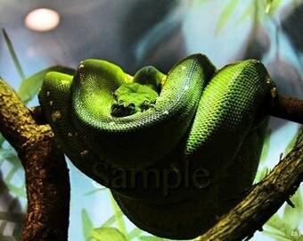 Bundled Up Snake