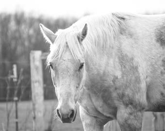 Tucker the Horse-Stare Down Photo, Horse Photography, Fine Art Print, Farmhouse Decor, Horse Photograph, Wall Decor, Home Decor, Farm Life