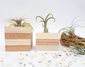 Natural Wood Striped Air Plant Holder Succulent Indoor Planter Home Decor Office Decor Coworker Gift Table Centerpiece Wood Decor