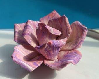 Pink/purple Rose