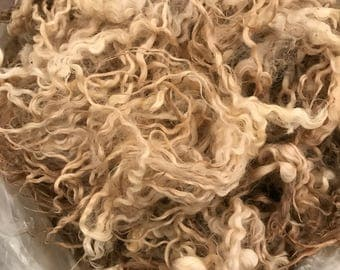 Raw White Leicester Longwool Lamb Fleece for Handspinning (Constance)
