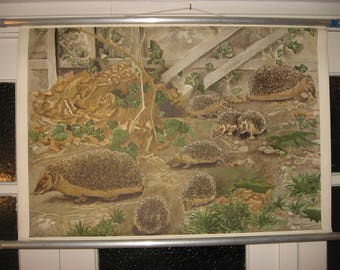 reserviert! Vintage Pull Down School Chart. Hedgehog / Igel. Mid Century. Pull down map.