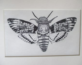 Moth Insect Ink Drawing