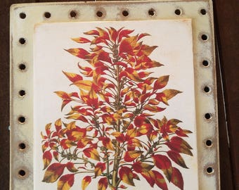 Pegboard with Aged Botanic Illustration Book Page - Red Flowers