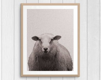 Sheep Print - Animal Wall Art - Farm Animal - Nursery Art - Cottage Decor - Barnyard Print - Black And White - Digital Art - Sheep Photo