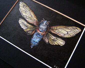 Cicada Illustration