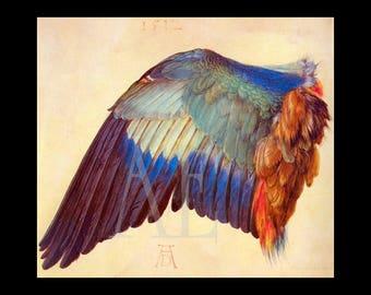 PR-104 Artistic Ephemera Print ~ One 8x10 or Two 5x7s ~ Albrecht Durer 'Bird Wing, Blue Roller' c. 1512