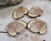 4 Stunning Juniper Tree Slices ~  tree cookies, wood slices, wood discs (WS7016)