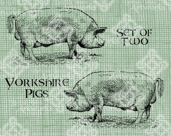 Digital Download, Yorkshire Pigs, England, English Swine, transparent png