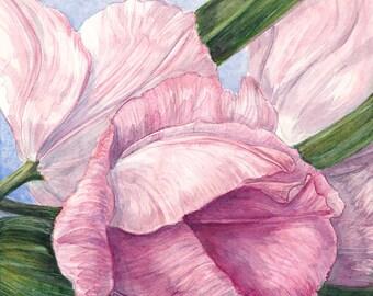 Tulips Two Original Watercolor Painting