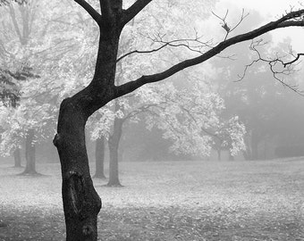 Foggy Autumn Morning (Square format) black and white landscape photograph