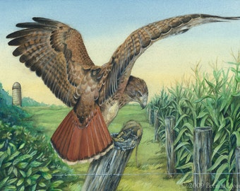 ORIGINAL Painting - Red-Tailed Hawk Farmland Guard - Wildlife Raptor Bird Art