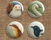 Set Of 4 Bird Pinback Button Badges (TB)