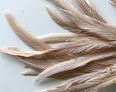 COQUE TAIL FEATHERS Loose / Nude, Blush, Skin,   / 185