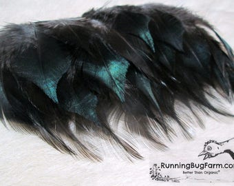 "Real Black Cruelty Free Feathers Black Jersey Giant Rooster Chicken Shoulder Back Feathers Bird Feathers For Crafts Eco 25 @ 3 - 3.5"" / BJG9"