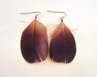 Natural Feather earrings  blue pheasant