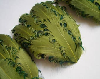 SET OF 4 - Lime and Hunter Curled Goose Feather Pads