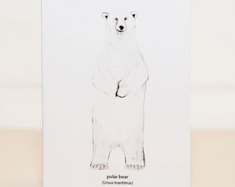 Polar Bear Mini Card
