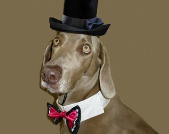 "Dog Top Hat - Wedding Costume - The Aristocrat Top Hat for dogs with 16-26"" collar size"
