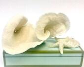 RESERVED FOR MELISSA Beach Decor - Natural Cup Coral - Coastal Decor 35th Anniversary Gift Sea Shells Seashells