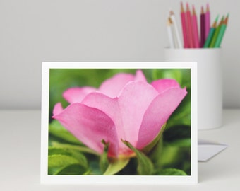 Pastel Pink Rose Note Card, flower photo notecard, heart shaped rose petal floral photography stationery, a2 or a7 blank greeting card