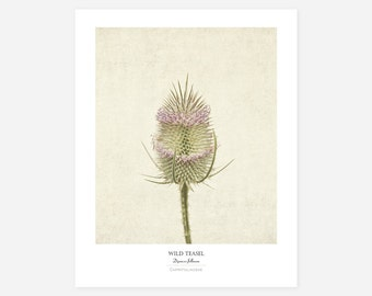 Wild Teasel Original Art Print - Botanical Wall Art - Flower Poster - Large Botanical Print - Gifts for Gardeners