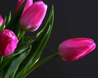 OVERSTOCK Photograph Sale - Four options - 5x7 photos in 8x10 white mats - 4.95 each, optional frame for 10.00 - Flower Theme - Tulips