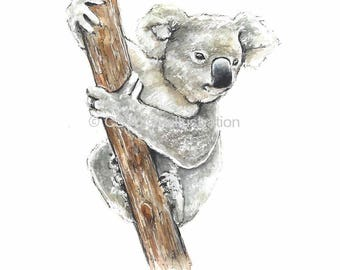 Koala - Fine Art Print