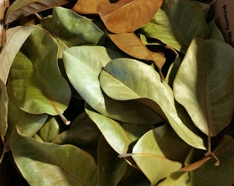 MAGNOLIA LEAVES DRIED  light green shades