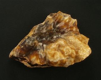 Stromatolite - agatized - rare specimen