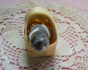 Taxidermy Mouse in a Vintage Basket. Dennis.