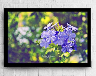 Flower Photography, Light Purple Green Floral Wall Art, Bedroom Decor, Nature Photograph, Bedroom Wall Art, Lime Green and Purple