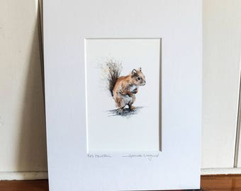 Print - Red Squirrel - Pencil and Watercolour Drawing