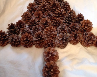 "Half PRICE SLASH Gorgeous Uniform Pine Cones for Display, Crafts Collected the Best For You. Sold in multiples of 20  Each Approx. 2.5"" x 3"""