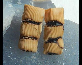 Bamboo Coral Cabochon pair,33x15x8mm,11.1g