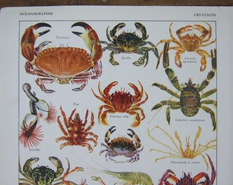 Crabs lobsters Sea fish Crustaceans Print Double sided, 1934 Vintage French Shrimps