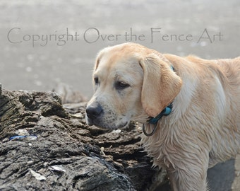 Salty Sea Dog Labrador at the Ocean Photo Greeting Card